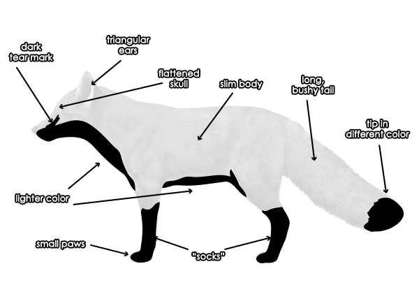 Fox Body Parts >> How To Draw Animals Foxes