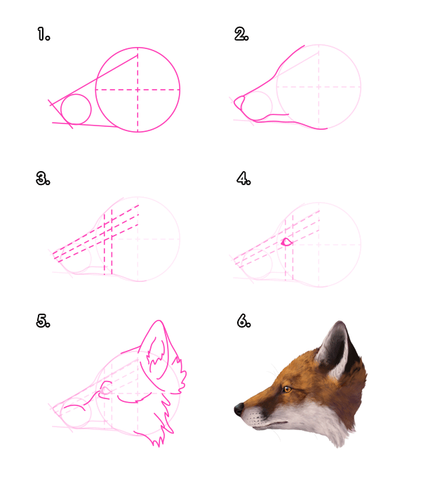 How to draw a fox - photo#24