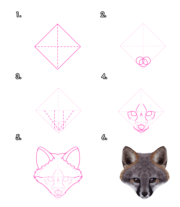 how to draw animals foxes