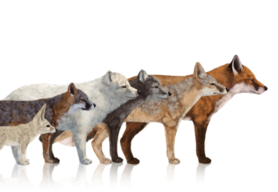 Preview for How to Draw Animals: Foxes