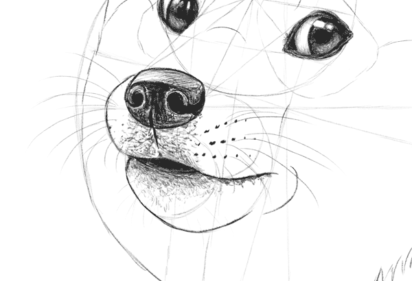 Such Tutorial Many Fun How To Draw Doge