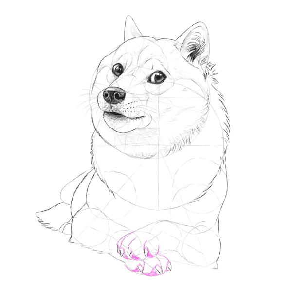 how to draw a doge easy step by step