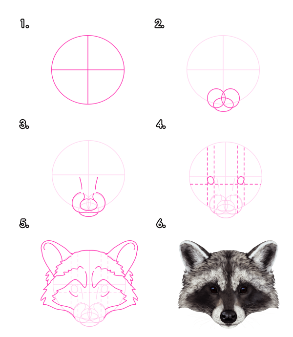 How To Draw Animals Red Pandas And Raccoons