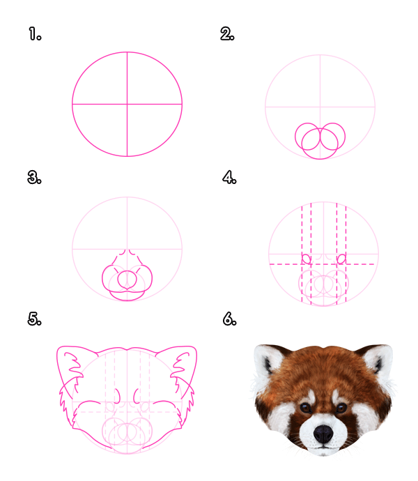 Drawing the red pandas head front
