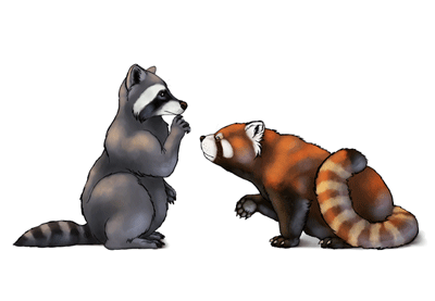 Preview for How to Draw Animals: Red Pandas and Raccoons