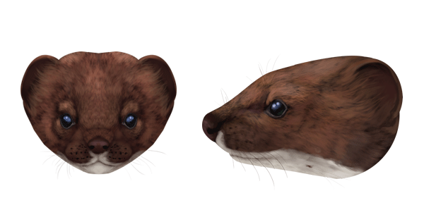 how to draw an otter head