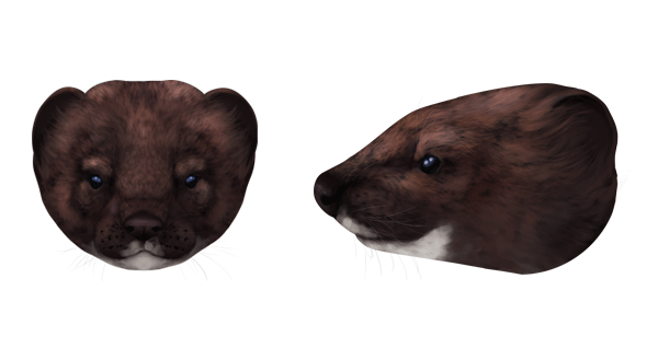 How To Draw Animals Weasels Stoats Minks Polecats And