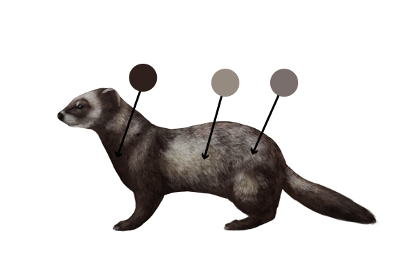 the polecat