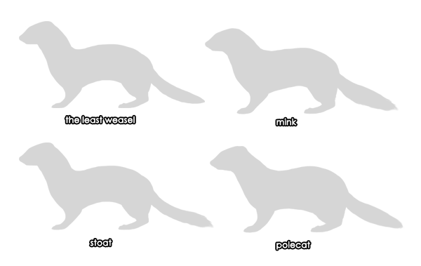 How to Draw Animals: Weasels, Stoats, Minks, Polecats and Ferrets