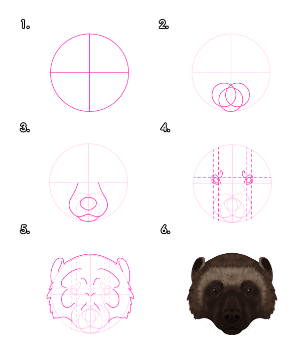 how to draw a wolverine animal