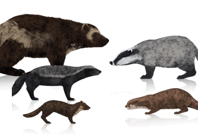 Preview for How to Draw Animals: Wolverines, Badgers, Otters and Martens