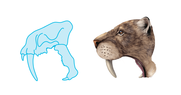 Image of: Prehistoric Head Pinterest How To Draw Animals The Great Extinct Mammals