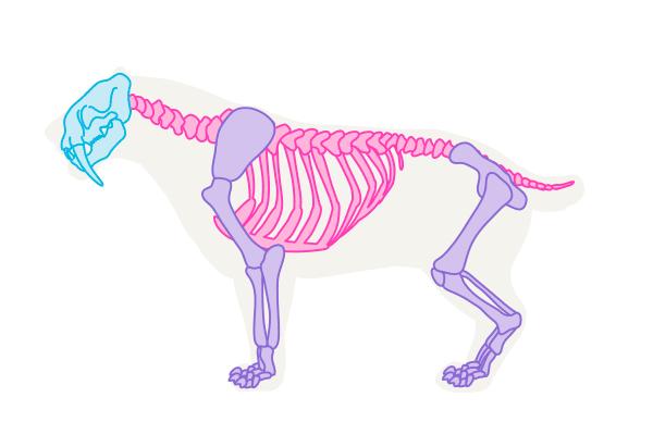 Image of: Skeleton Advertisement Naturalis Biodiversity Center How To Draw Animals The Great Extinct Mammals