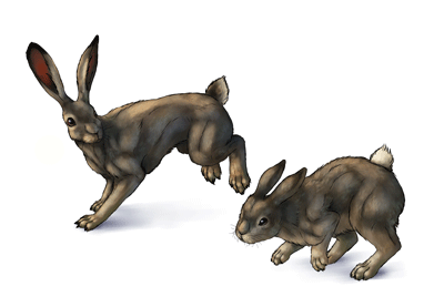 How to draw rabbits hares preview