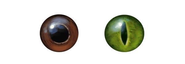 couleurs des yeux de serpent