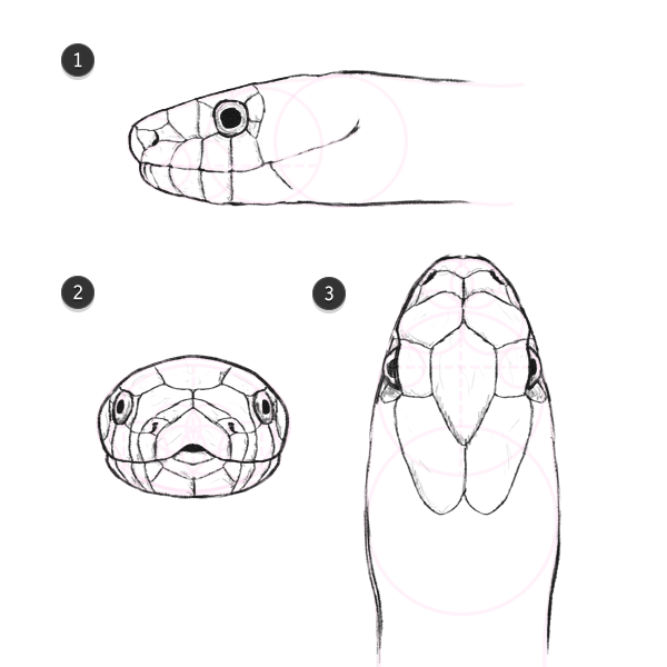 How To Draw Animals Snakes And Their Patterns