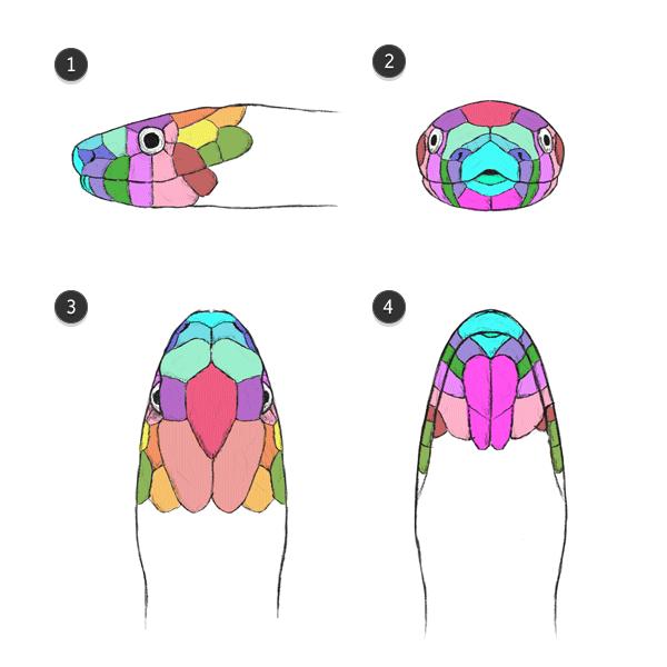jeu de couleurs à l'échelle du serpent