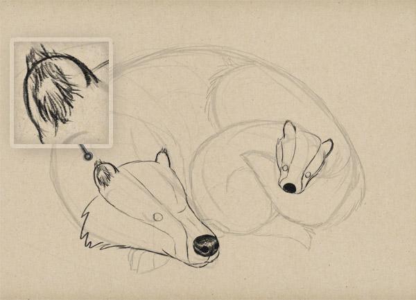 fur on ears