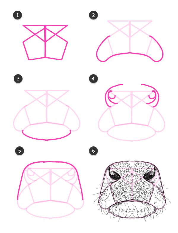cows nose diagram online schematics wiring diagrams u2022 rh pushbots sender com