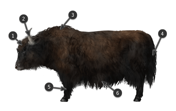 how to draw yak