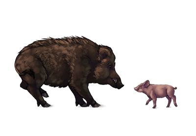 How to draw pigs prev