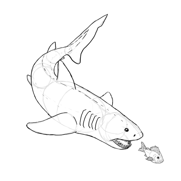 How To Draw Animals Fish And Sharks