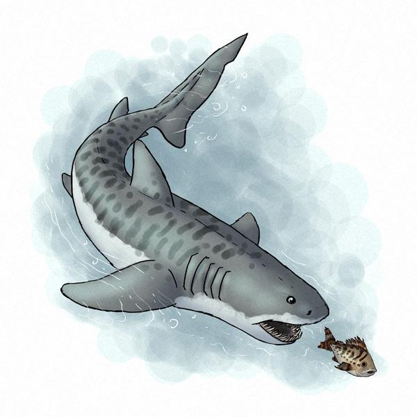 draw shark 5