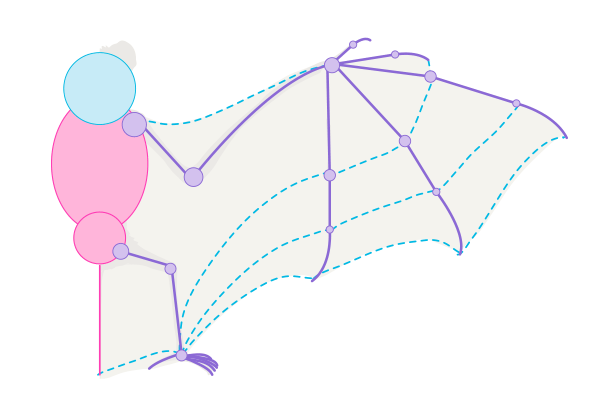 how to draw bat wings 8 membrane