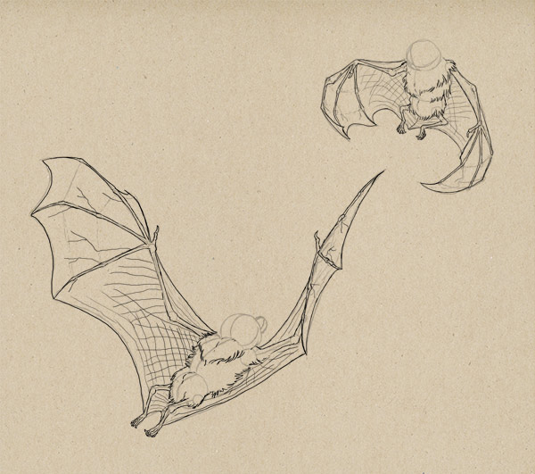 how to draw bat wings fur