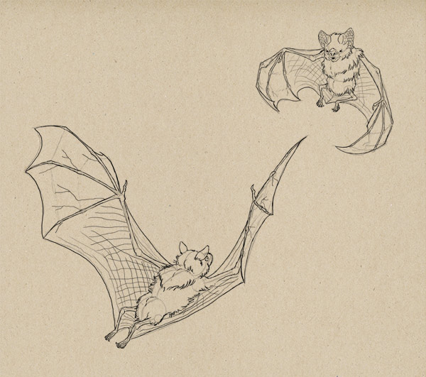how to draw bats done
