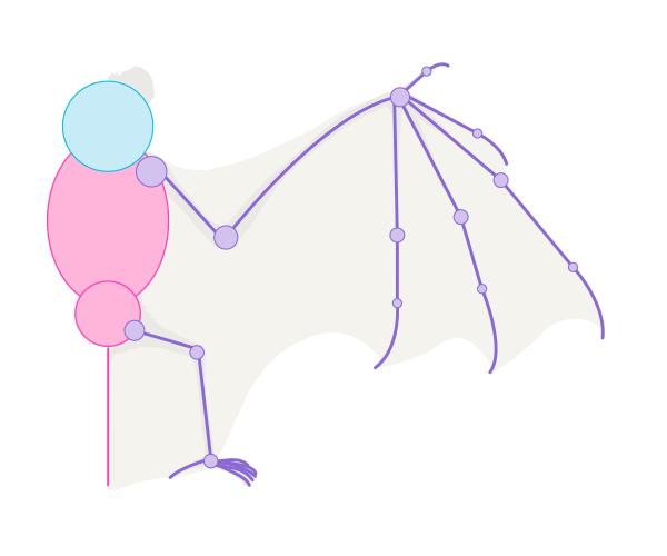 bat how to draw