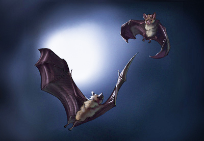 How to draw bats prev