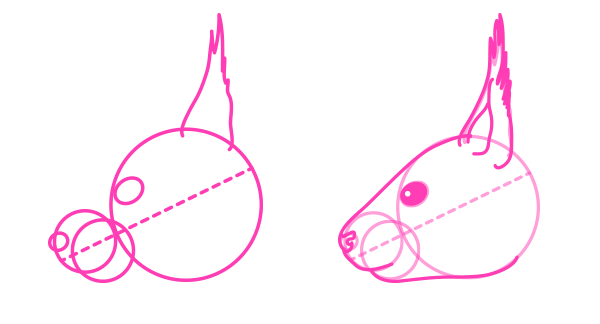 rodents how to draw red squirrel head