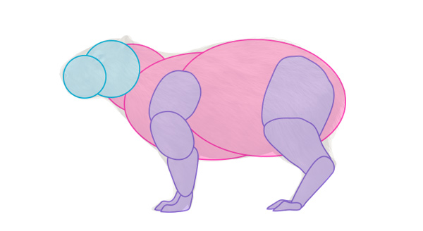 how to draw capybara body 2