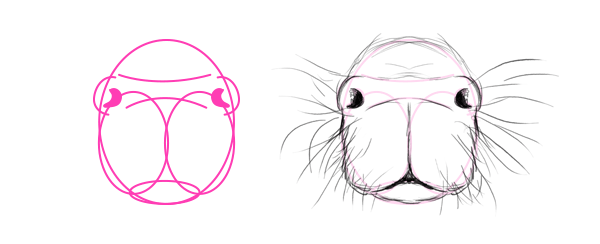 how to draw capybara head mouth snout nose