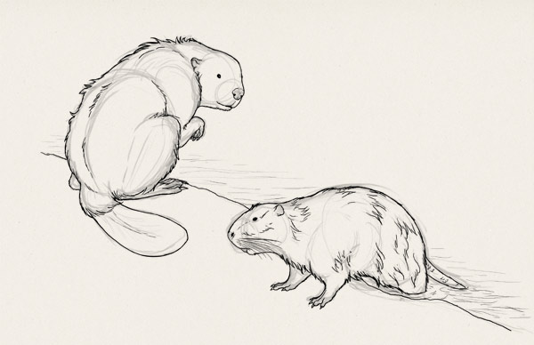 how to draw big rodents exercise 4