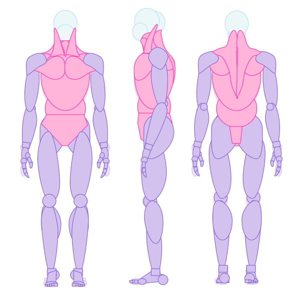 simplified human muscle draw artist