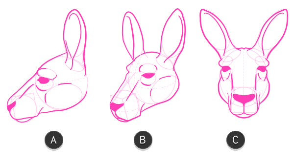 kangaroo how to draw head 9