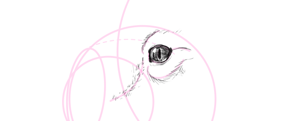 koala how to draw eyes 4