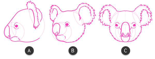 koala how to draw head 7