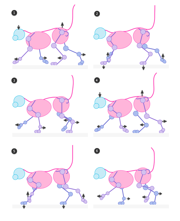 cat pacing gait pace walking animation cycle frames 3