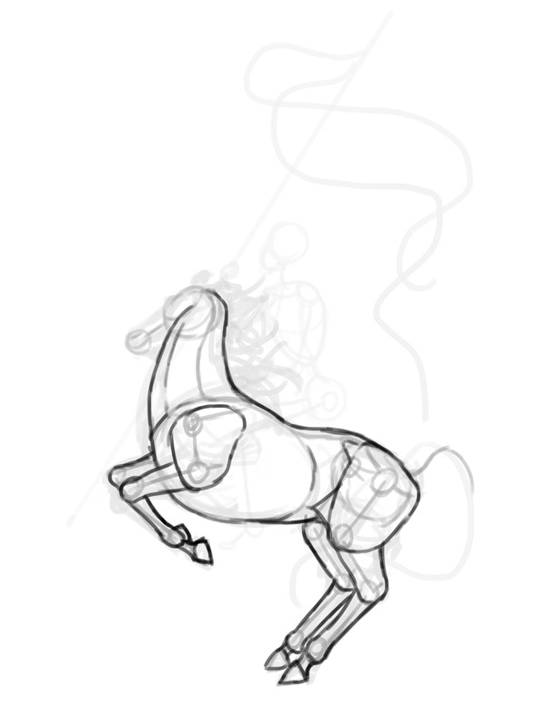 horse anatomy rider drawing 2