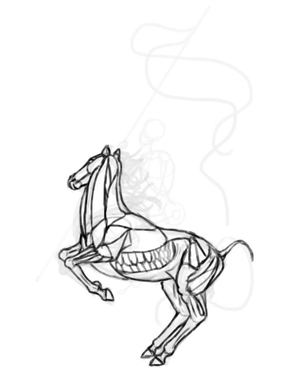 anatomia cavalo cavaleiro Desenho 3
