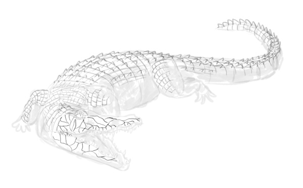 how to draw crocodile step by step 15