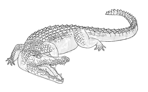 how to draw crocodile step by step 17