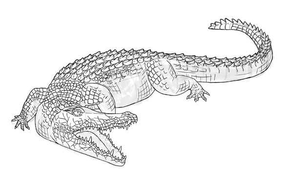 how to draw crocodile step by step 18