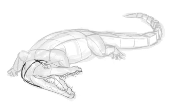 how to draw crocodile step by step 6