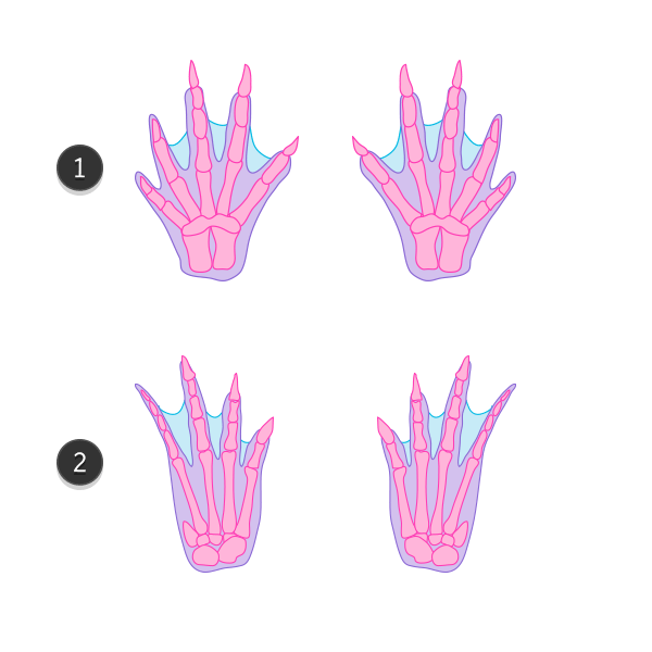 how to draw crocodile paws claws feet