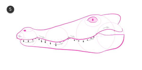how to draw crocodile head 5