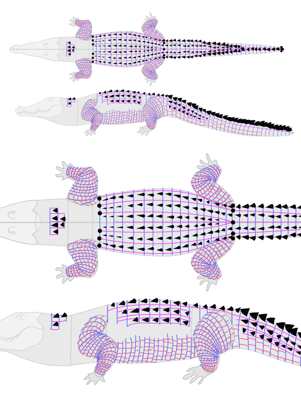 how to draw crocodile alligator scales pattern 4